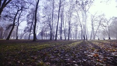 Moving sideway around forest with tall trees with no leaves on sunny day 4K Stock Footage