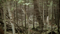 DENSE AUTUMN FOREST Stock Footage