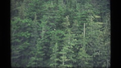 1977: a huge forest covered with number of plants and trees ALASKA Stock Footage