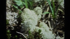 1977: a crooked path winds it's way through the mountains ALASKA Stock Footage
