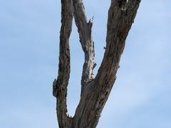 Jekyll Island Driftwood Beach Stock Footage