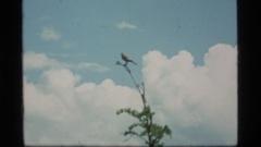 1977: bird perched on a tree SAPPHIRE LAKE MONTANA Stock Footage
