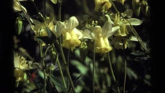 1977: a bee is next to a group of yellow flowers while the wind moves Stock Footage