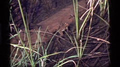 1977: a frog in the wild SAPPHIRE LAKE MONTANA Stock Footage