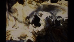 1978: gnarly old weathered twisted log LAKE TAHOE CALIFORNIA Stock Footage