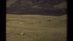 1979: lost in grassland CANADA Stock Footage