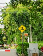 Commuter line with yellow road train sign illustration symbol  green bamboo tree Stock Photos