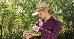 Attractive Agriculturist Man Examine Bio Green Bean Show Thumb Up Looking Camera Stock Footage