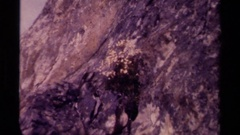 1979: small dried out flowers on inclined mountain CANADA Stock Footage