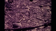 1979: view of a floor made of various sticks and branches CANADA Stock Footage