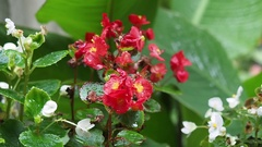 Garden flowers in the rain gently swinging in the breeze Stock Footage