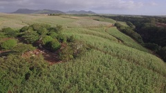Aerial shot of sugarcane fields in Mauritius Stock Footage