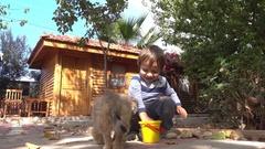 Child with love nurses a Pekinese dog Stock Footage