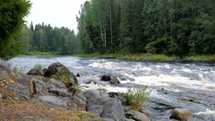 River. Thresholds. The strong current. Forest. Stock Footage