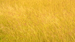 Meadow flowers in early sunny fresh morning. Vintage autumn landscape Stock Footage