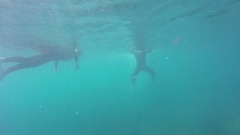 Whitsunday Island, Snorkeling, Young Man Swimming to Bottom Stock Footage