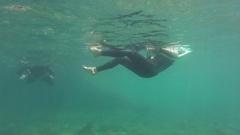 Whitsunday Island, Snorkeling, People Swimming Stock Footage