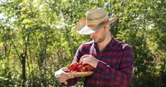 Confident Gardener Man Holding Fresh Red Pepper Show Ok Sign Inspecting Volume Stock Footage