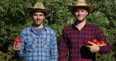 Optimistic Handsome Farmer Men Team Work Hold Organic Red Tomato Smiling Camera Stock Footage