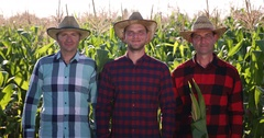 Happy Farmer Men Show OK Sign Bio Farming Corn Field Organic Agriculture Concept Stock Footage