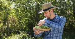 Happy Farmer Man Bio Agribusiness Hold Examining Green Beans Show Thumb Up Sign Stock Footage