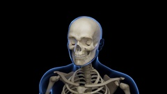 Complete close-up animation of the Skeletal System with transparent body in blue Stock Footage