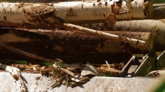 Lumber factory Conveyors of logs sorting machine Stock Footage