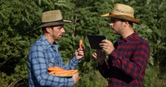 Farm Workers Team Work Collaboration Hold Bio Carrots Talk Using Digital Tablet Stock Footage