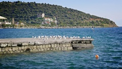 Beautiful shoreline village seagulls pier dock blue water scenery sunny day Stock Footage