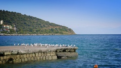 Beautiful coast seagulls pier dock blue water tranquil scenery sunny day Stock Footage