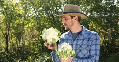 Positive Farmer Man Hold Organic Cauliflower Show Thumb Up Sign Checking Quality Stock Footage