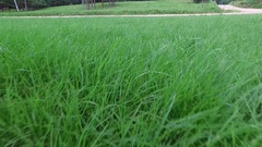 Follow Walk Green Grass Foot View Stock Footage