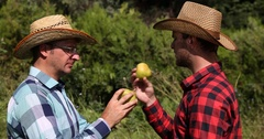 Farmer Men Collaborating in Pear Orchard and Talking About Organic Fruit Market Stock Footage