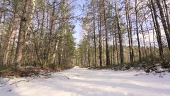 Shot snowy forest trees in the winter Stock Footage