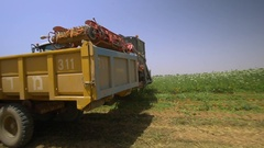 Season of harvesting. Agricultural machinery collects carrots. Stock Footage