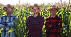 Agriculturist Peasant Farmer Men Team Posing Looking Camera Organic Corn Field Stock Footage