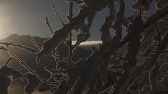 Winter Mist Snowscape Blazing Sun Panning Stock Footage