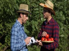 Teamwork Farmer Men Explain Examining Red Tomato Quality and Writing an Agenda Arkistovideo