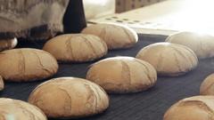 Preparing loafs of wheat bread on conveyer in bakery Stock Footage