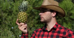 Farmer Man Examining Quality of Organic Pineapple in Tropical Farm Eco Field Day Stock Footage