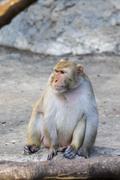 Image of monkey sitting on nature background. Stock Photos