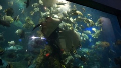 A man in a suit with diving feeding fish in an aquarium. Stock Footage