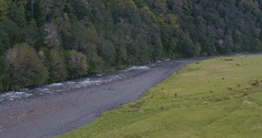 Aerial of of flowing river in a forest in Milford Sound, New Zealand Stock Footage