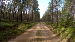 A quick drive through the pine forest. Forest road. Stock Footage