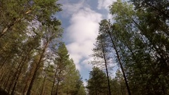 A pine forest. A Sunny day in the forest. The drive through the pine forest. Stock Footage