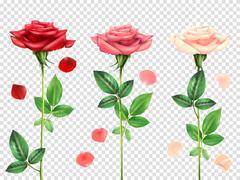 Realistic Roses Set Stock Illustration