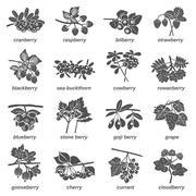 Berries Monochrome Icons Set Stock Illustration