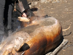 People who fry a pig with flame from a gas cylinder and then it clean Stock Footage