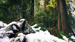 Passing Ferns Buried In Snow In The Forest Stock Footage