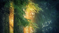 Trees Dripping In Golden Sunlight Stock Footage